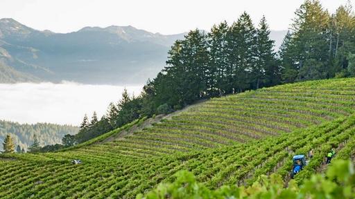 Sterling Vineyards Image