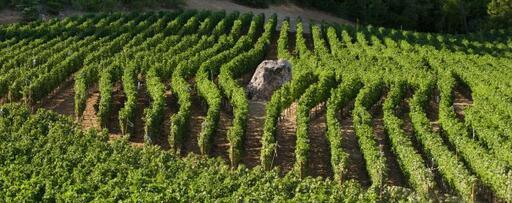 Barbour Vineyards Image
