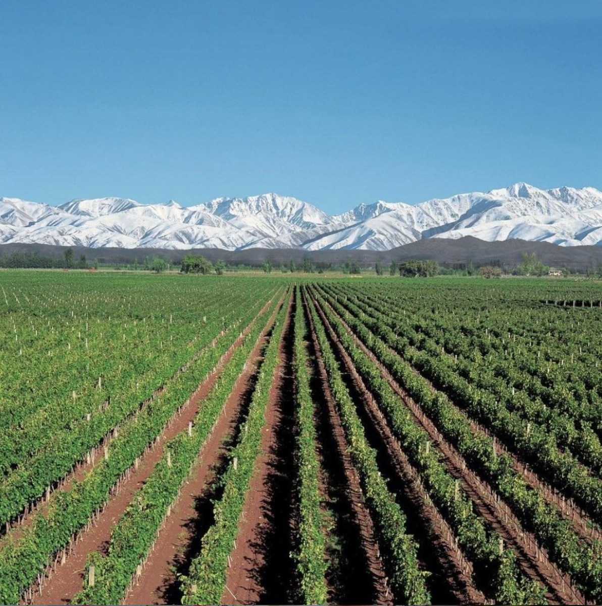 Alamos Wines Cover Image