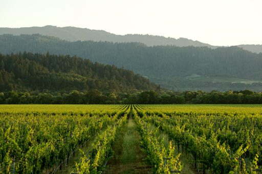 Roots Run Deep Winery Image