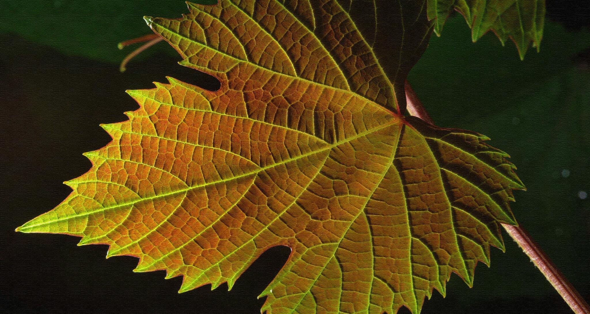 Famila Cecchin Organic & Natural Wines Cover Image