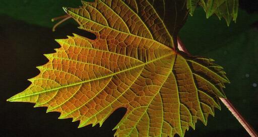 Famila Cecchin Organic & Natural Wines Image