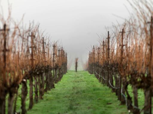 Acumen Wines Image