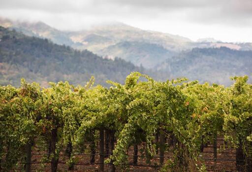Mount Veeder Magic Vineyards Image
