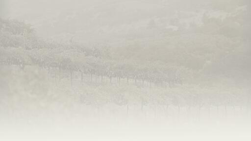 Page Wine Cellars Image