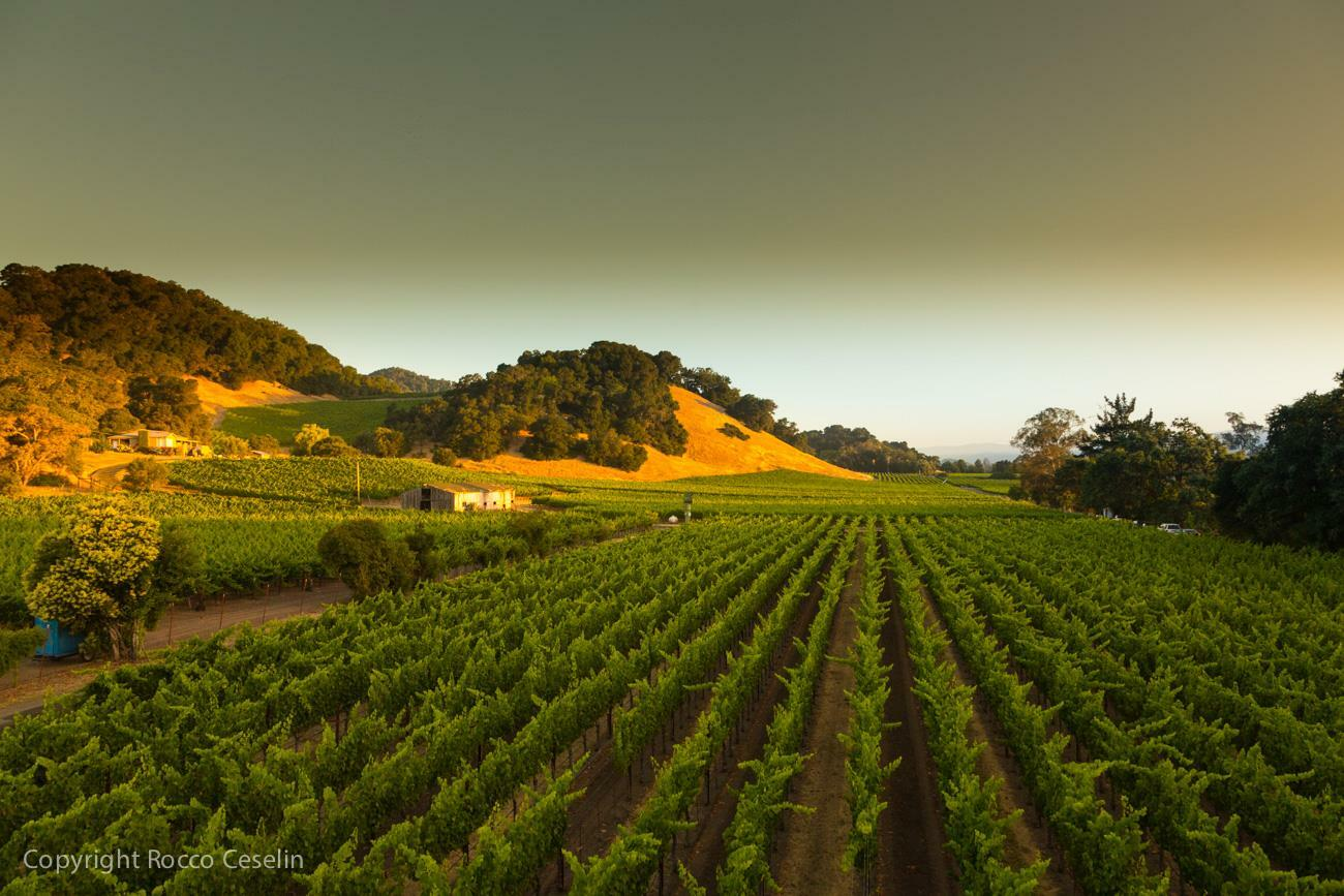 Darms Lane Winery Cover Image