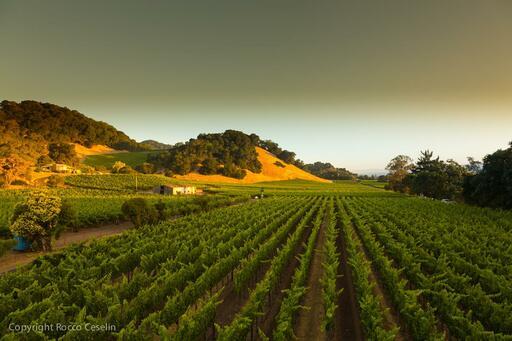 Darms Lane Winery Image