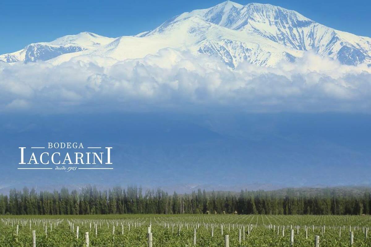 Bodega Iaccarini Cover Image