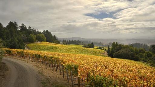 Ramey Wine Cellars Image