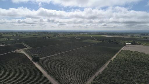 1853 Old Vine Estate Image