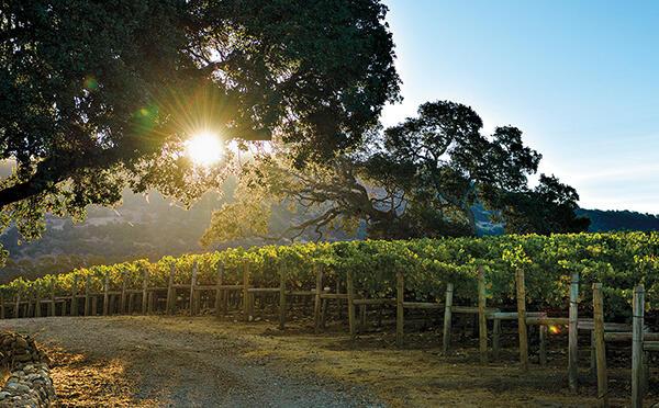 Ziata Wines Cover Image