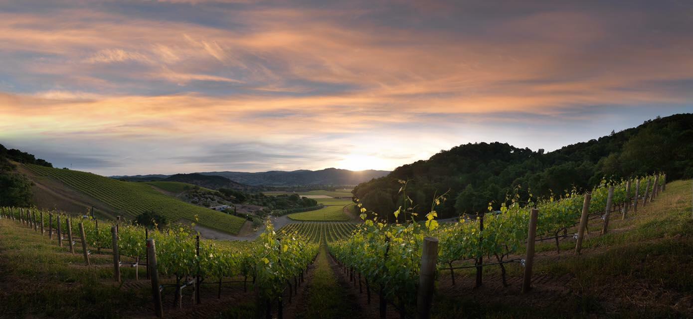 Blankiet Estate - Paradise Hills Vineyard Cover Image
