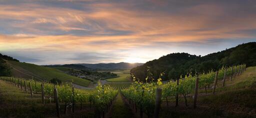 Blankiet Estate - Paradise Hills Vineyard Image