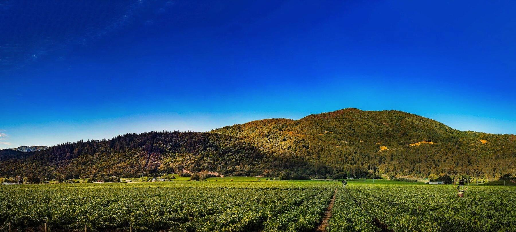 Taub Family Vineyards Cover Image