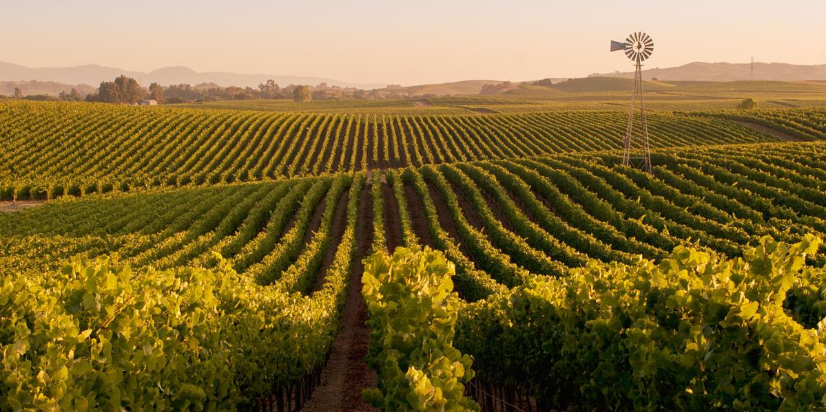 Acacia Vineyard Cover Image