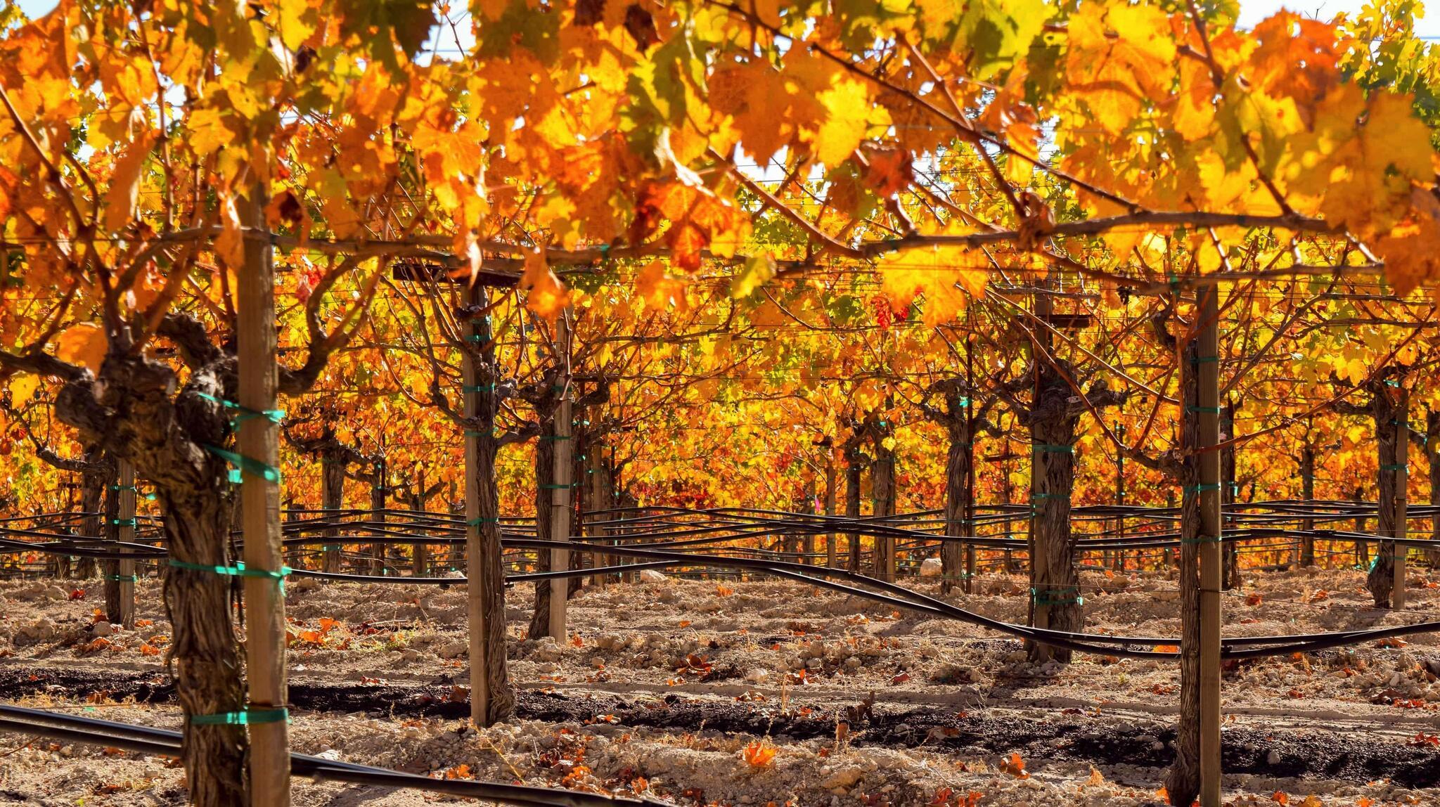 Schweiger Vineyards Cover Image