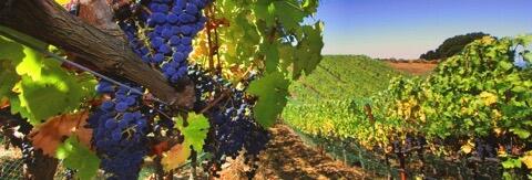 Porter Family Vineyards Cover Image