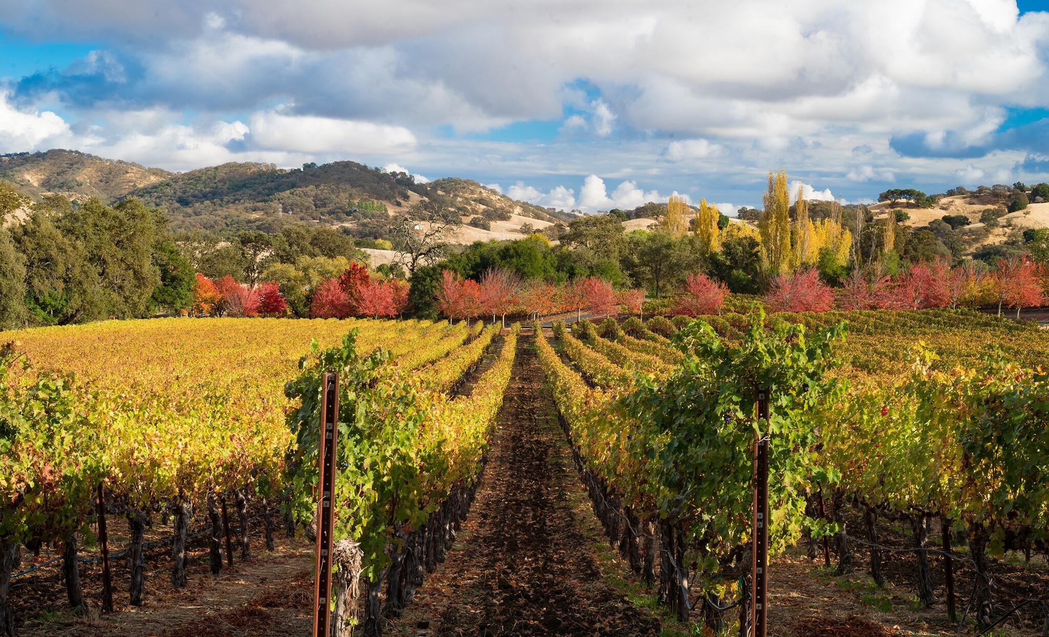 Hestan Vineyards Cover Image