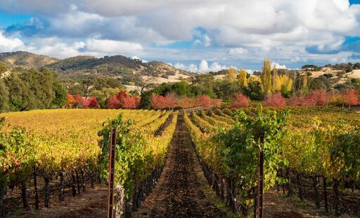Hestan Vineyards Image