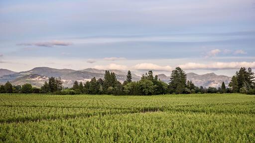 Pellet Estate Image